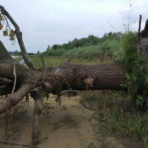 Погибшее дерево